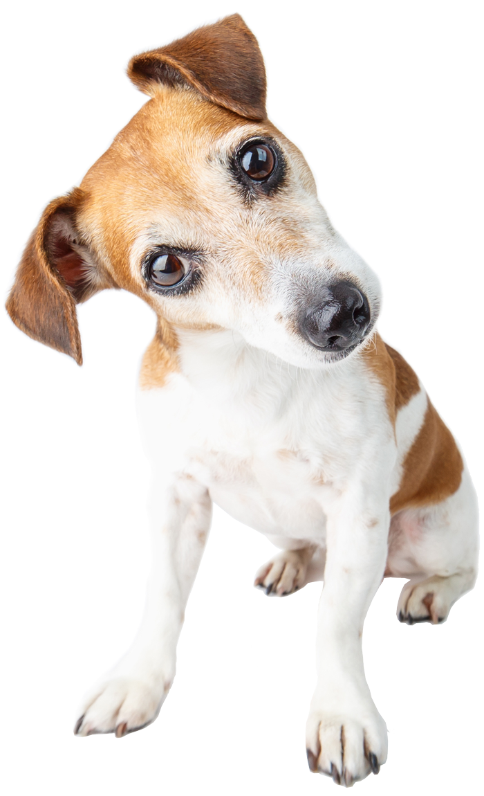 dog-curious-look